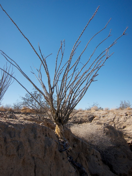 Desert flora eventually succumbs to erosion as well
