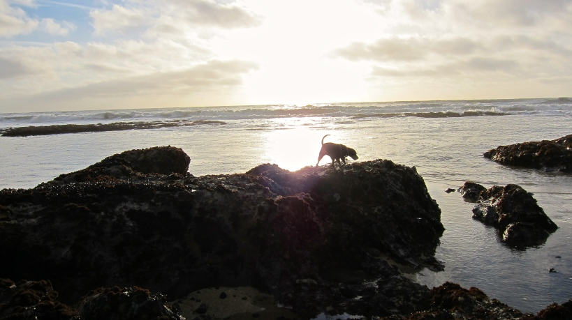 Lilly inspecting a rock formations only accessible during low tide