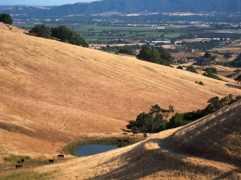 Hillside hike with views overlooking the town of Gilroy, CA