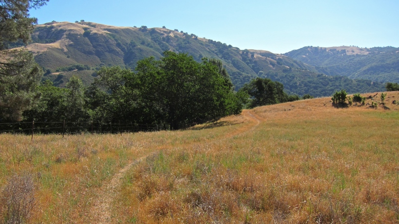 The rolling hillside